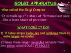 what does the golgi apparatus