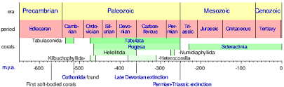Coral Classification Chart Coral Wikipedia