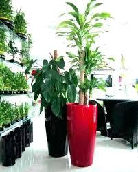 best plants for outdoor pots beautiful modern outdoor plants artificial tall garden pots best for with best plants for outdoor pots