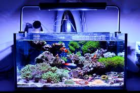 The Best Nano Reef Tanks 2019 Comparison Updated