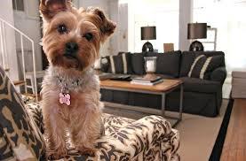 waterproof dog rugs pet proof your company c