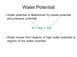 Water Potential Equation Water Potential Equation