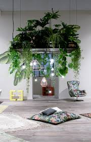Modern Interior Design with Beautiful Hanging Indoor House Plants, Black  Coated Metal Plant Holder Finish