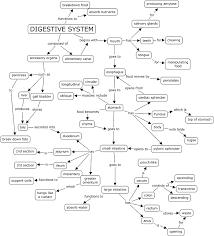 Digestive System Worksheet Answers - payasu.info