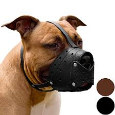 pitbull terrier. Plain Terrier CollarDirect Pit Bull PitBull Terrier Secure Basket Dog Muzzle Genuine  Leather Staffordshire Black For Pitbull R