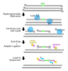 Crispr Cas9 Technology Used To Target Nanopore Sequencing Idt