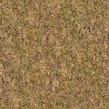 Dirt grass texture seamless Dry Grass Sketchup Texture Club Dry Grass Texture Seamless 12913