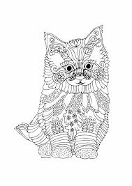 kittens and erflies coloring book by katerina svozilova amazon