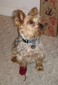 Dog Booties Pattern New Decorating Ideas