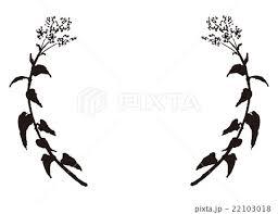 蕎麦の花フレームのイラスト素材 22103018 Pixta