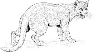 Awesome Big Cat Coloring Pages 68 In Coloring Pages Online With