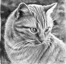 realistic cat drawing in pencil. Modren Pencil Cat Drawing Cat Drawing Intended Realistic In Pencil I