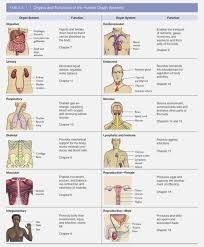 Body Systems Chart Chart For The Body System Human Body Systems And Their