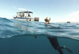 photo essay how to swim safely sharks newshour shark ecologist ocean ramsey surfaces after swimming sharks on a cageless shark dive tour in