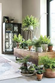 Feng Shui Planten Woonkamer Droomhome Interieur Woonsite