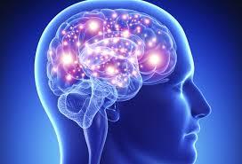 """La falta de sueño hace que el cerebro se """"coma"""" a sí mi... en Taringa!"""