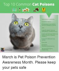 Top 10 Common Cat Poisons Poison Topical Spot On Insecticides