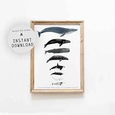 Whale Scale Chart Whale Size Comparison Chart Digital Download Montessori Materials Homeschool Posters Classroom Decor Whale Art Printable Poster