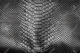 Snake Skin Pattern Impressive Black Snake Skin Pattern Texture Background Stock Photo Picture And