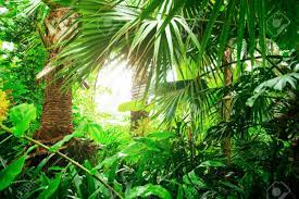 Beautiful Exotic Plants From Jungle ...