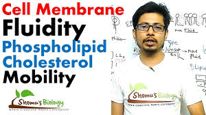 cell membrane fluidity and role of