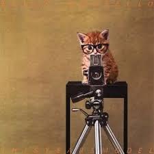 17 Best cat~photographer images   Cats, Crazy cats, Kittens