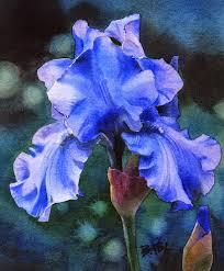 blue velvet sold iris flower watercolor painting