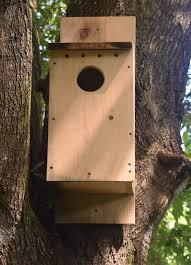 owl nest box building