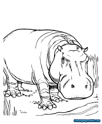 Baby Hippo Coloring Pages Free Printable Coloring Pages
