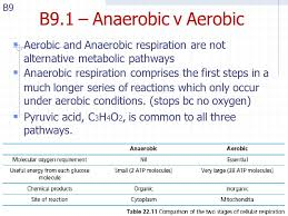 b9 1 anaerobic v aerobic aerobic and anaerobic respiration are not