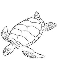 Small Picture Giant Green Sea Turtle Coloring Page Download Print Online