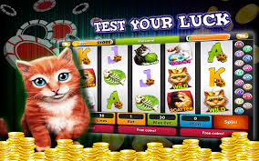 Image result for cat at casino