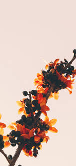 Hd Iphone X Wallpaper Flowers ...