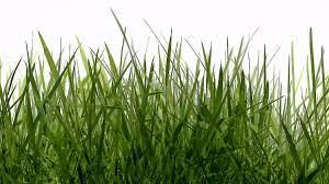 Grass Watercolor Tanker Full Ofu2026grass 1003 The Q Tanker Full Ofu2026grass 1003 The Q