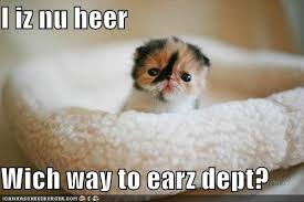 cute kittens quotes for kids. Brilliant Quotes Funny Kittens Intended Cute Kittens Quotes For Kids P