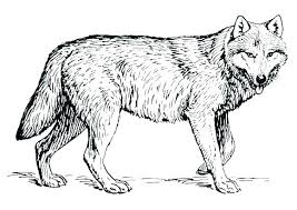 Wolf Coloring Page Free Printable Wolf Coloring Pages For Adults