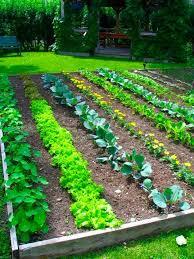 Lawn \u0026 Garden : Vegetable Garden Design Plans Garden Design Ideas ...