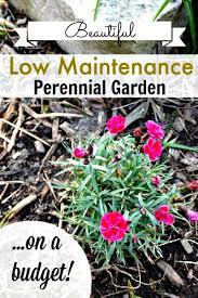 how to grow a low maintenance perennial garden on a budget
