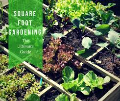 Square Foot Garden Plant Spacing Chart