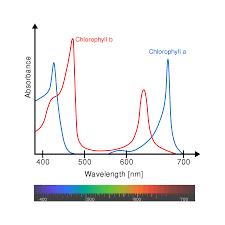First Light Spectrum Action Spectrum Wikipedia