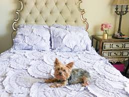 Rivulets Quilt Review + Anthropologie Bedding Sale! & Lifestyle blogger Candace Rose Anderson dog Yorkie Francesca lays on the  Anthropologie rivulets quilt in lavender Adamdwight.com