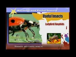 Beneficial Insects Chart Harmful And Useful Insects Youtube