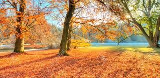 outdoor nature photography. Beautiful Colored Trees In Autumn, Landscape Photography. Snow On Background. Late Autumn And Outdoor Nature Photography I