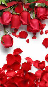 Mobile Red Rose Flowers Wallpapers ...