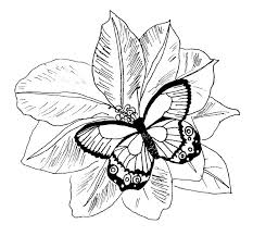 Printable Coloring Pages Of Flowers And Butterflies Coloring Pages Flowers Butterflies Coloring Home