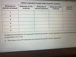 Solved Cellular Respiration In Yeast Under Anaerobic Cond