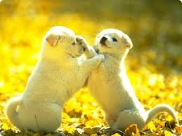 Image result for cute pics