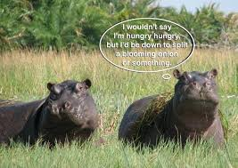 Sort-Of Hungry Hippos - Funny Images and Memes To Fill You Up With ... via Relatably.com