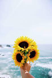 Sunflower wallpaper ...