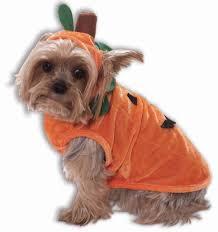 Wonderful Details. Pet Pumpkin Halloween Costumes Dogs ...